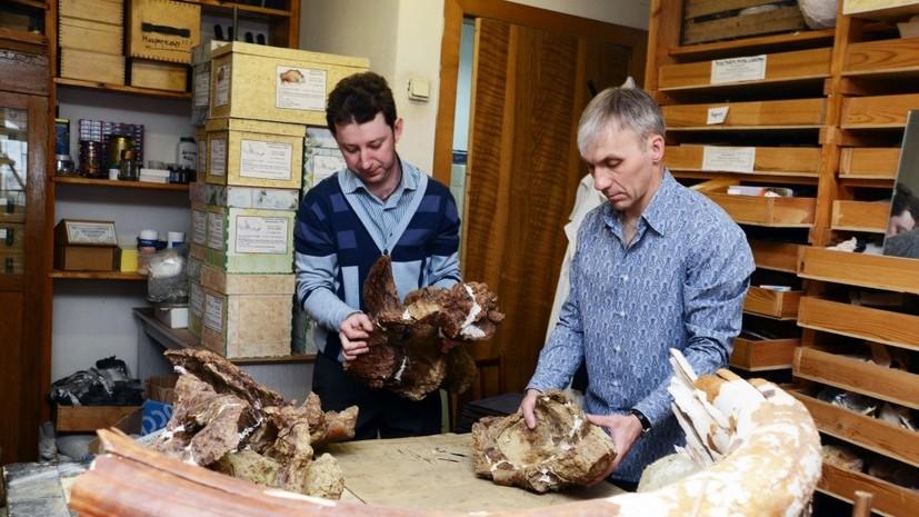 Сибирские учёные открыли новый вид динозавров