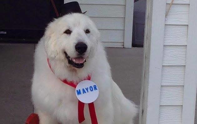 Duke the Dog Mayor of Cormorant, Minnesota