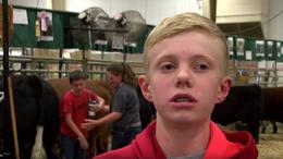 Мальчика зажало между двумя коровами в прямом эфире американского телеканала