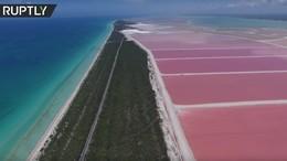 С высоты птичьего полёта: розовая лагуна в Мексике