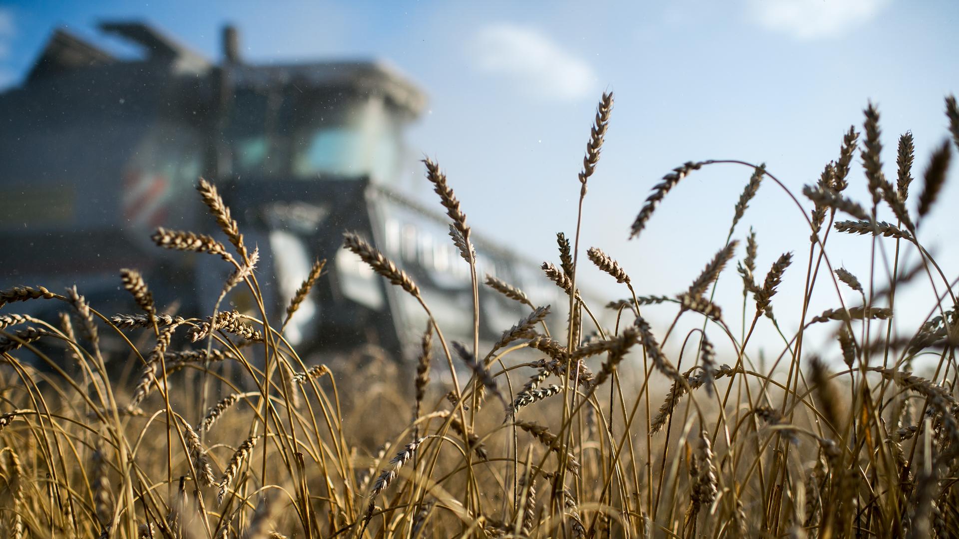 Der Spiegel: Россия впервые заработала на сельском хозяйстве больше, чем на оружии