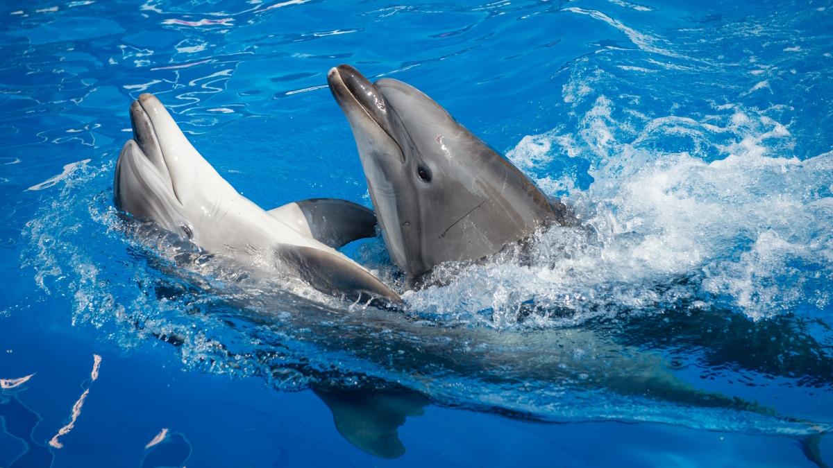 Крымские учёные: У дельфинов развита полноценная речь
