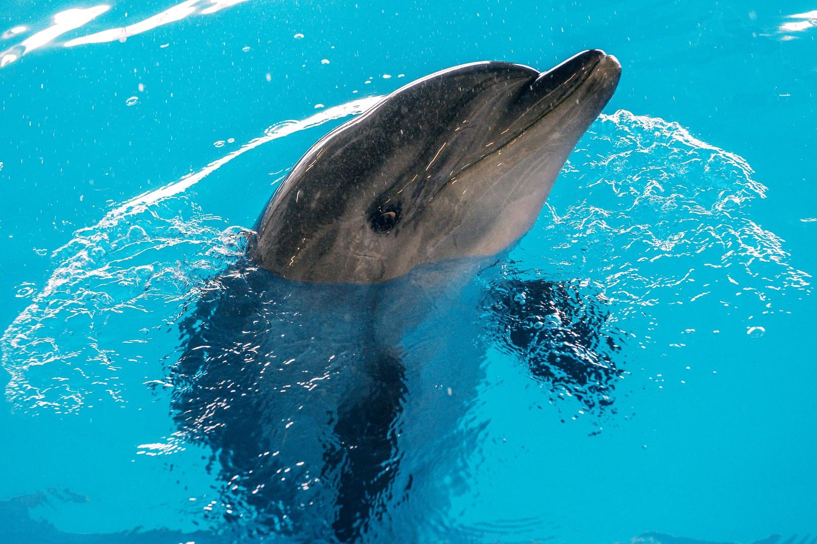 Есть контакт: как дельфины могут помочь при коммуникациях с внеземным разумом