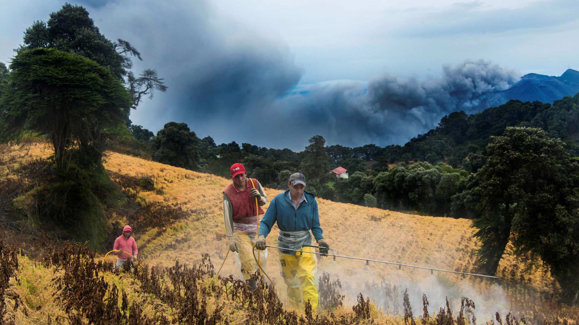 Фермеры работают у подножья вулкана Турриальба к востоку от Сан-Хосе.