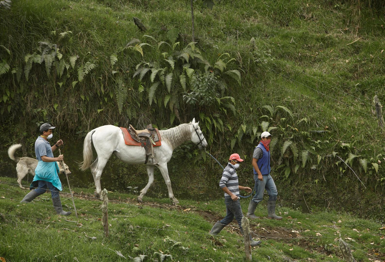Фермеры работают в специальных масках после выпадения пепла от извержения вулкана Турриальба.