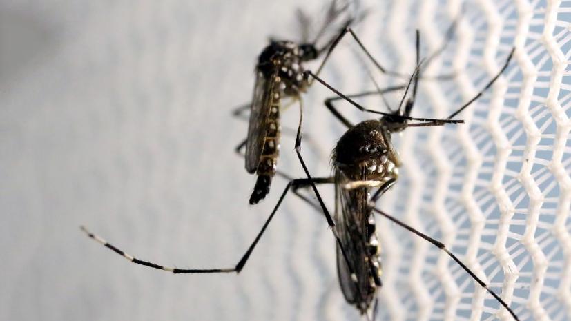 Лихорадка Зика: что мы знаем о вирусе, покорившем мир
