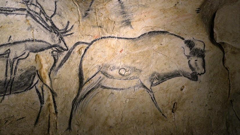 Бизон Хиггса: кого на самом деле рисовали первобытные люди