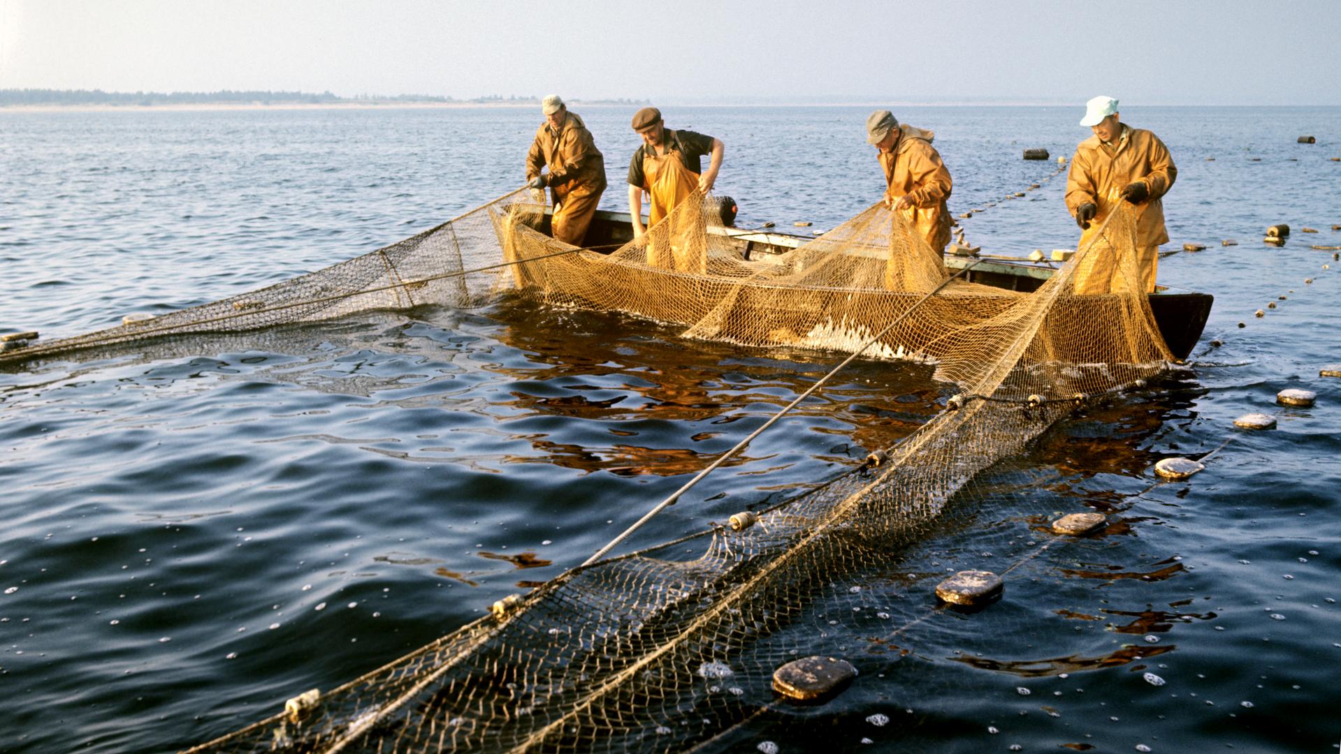 В 2017 году могут запретить вылов деликатесной рыбы из Байкала