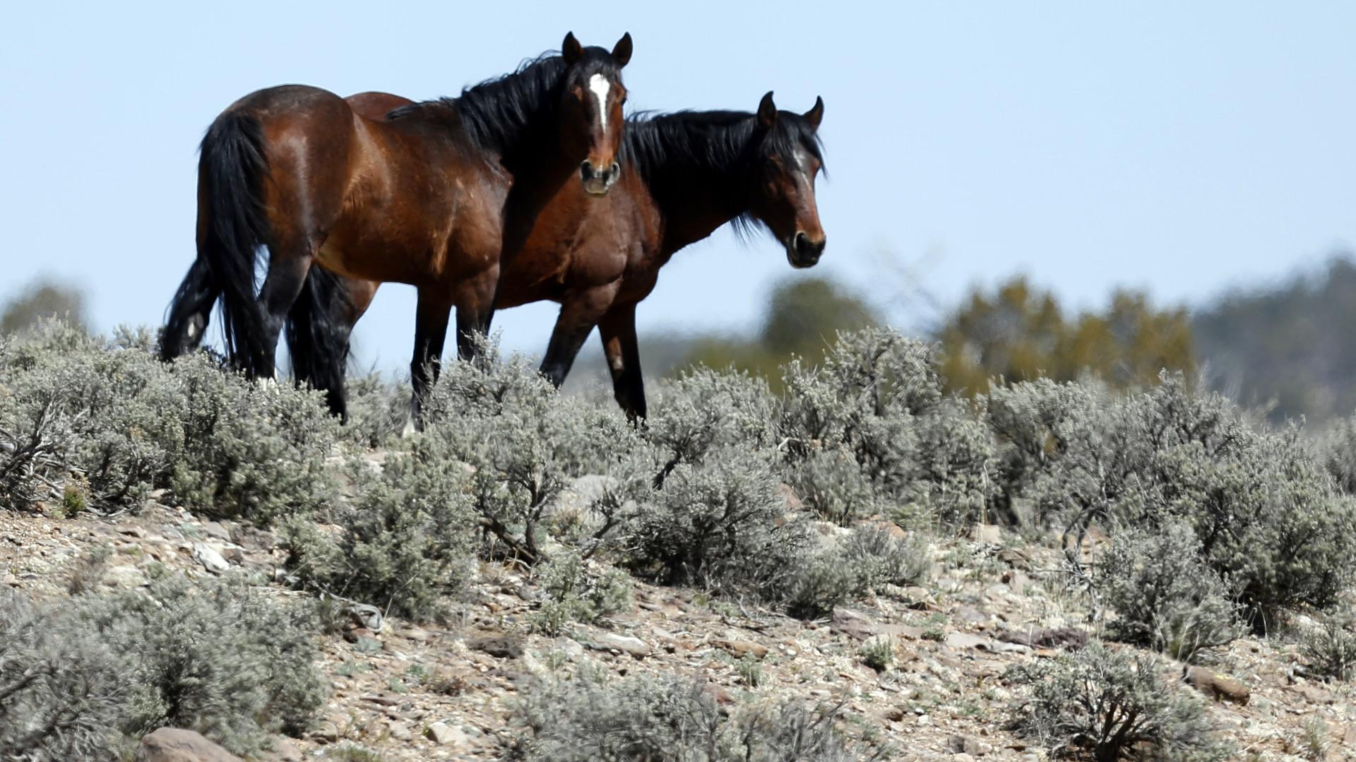 Ход конём: как люди одомашнили лошадь
