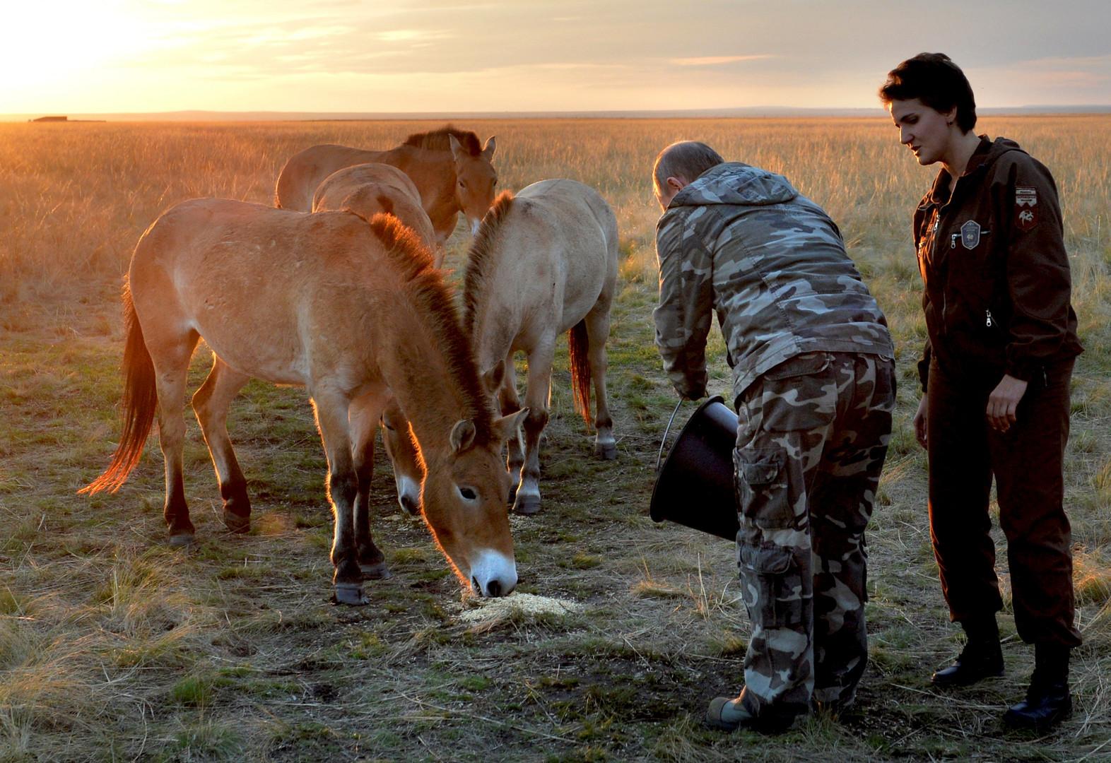 Владимир Путин выпускает лошадей Пржевальского в дикую природу в Оренбурге.