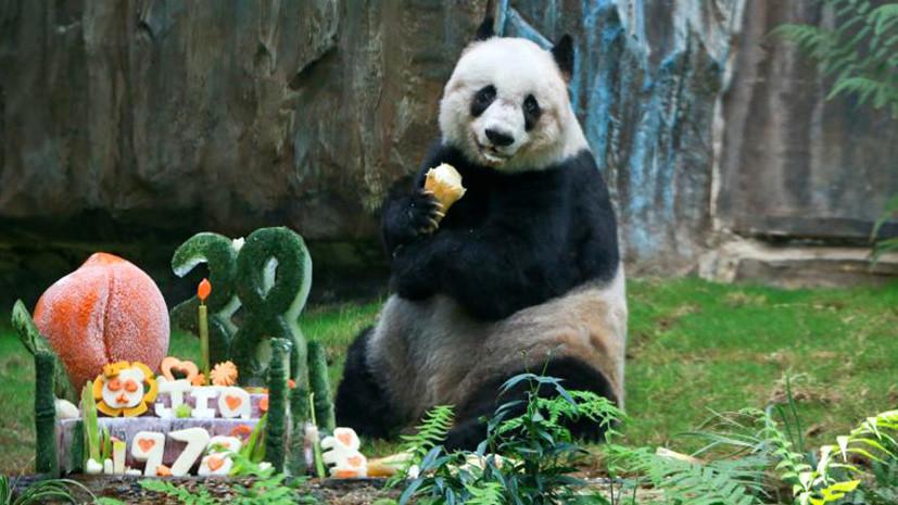 Цзя Цзя отмечает 38-летие.