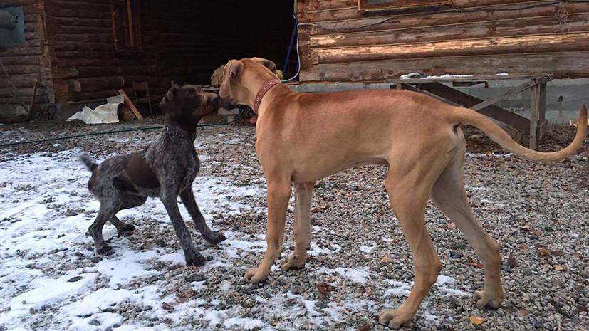 Хвостатый президент: в Екатеринбурге живет пёс по кличке Дональд Трамп