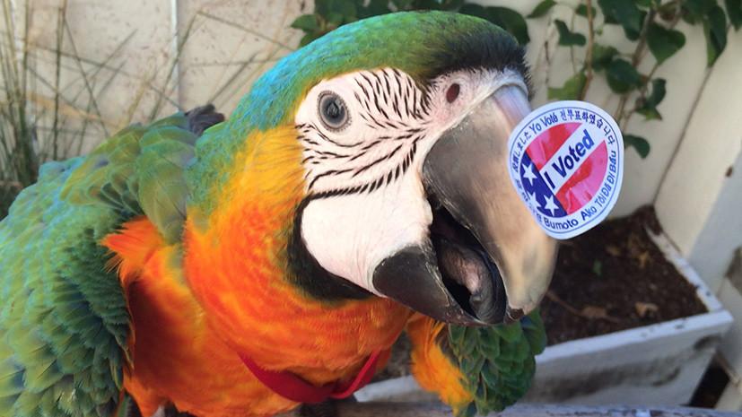 «Я голосую»: день выборов президента США в фотографиях пользователей соцсетей