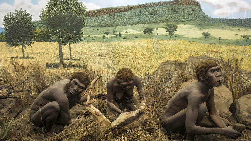 В мире однолюбов: ученые исследовали природу моногамии у приматов