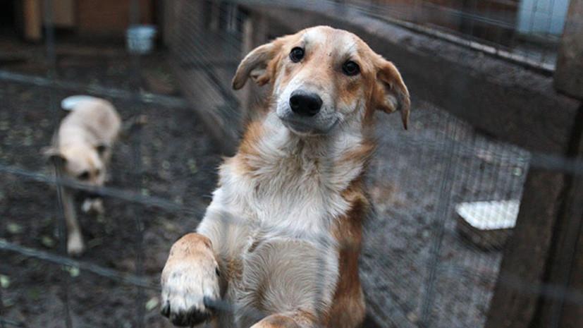 Под опекой закона: нормы обращения с бездомными животными рассмотрят до конца года