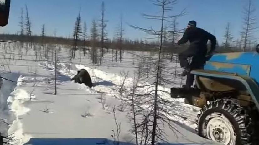 «Нечеловеческое поведение»: МВД расследует дело о жестоком убийстве медведя в Якутии