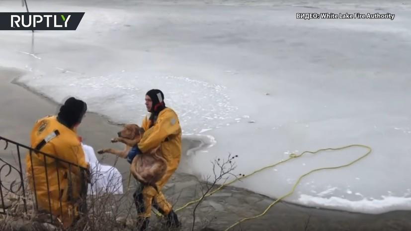 Пожарные США спасли пса из замёрзшего озера