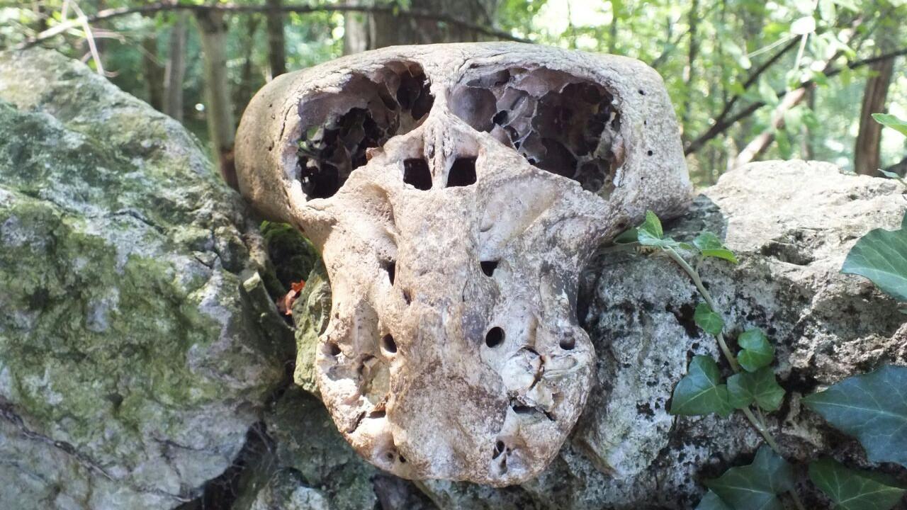 Сундук «Аненербе» и черепа неизвестных существ
