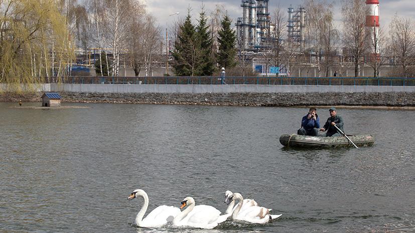 Среда обитания: в России появится общественный экопатруль