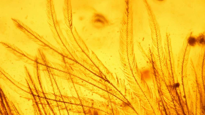 Хвост мелового периода: учёные нашли свидетельства наличия перьев у динозавров