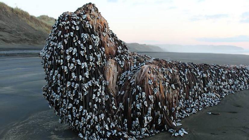 Монстр с дредами или ёлка: в соцсетях гадают о странной находке в Новой Зеландии