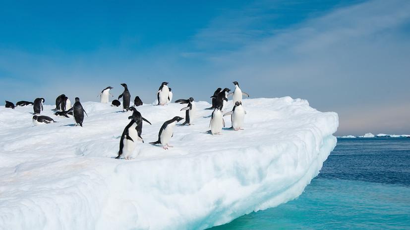Тест RT: Что вы знаете об Антарктиде?