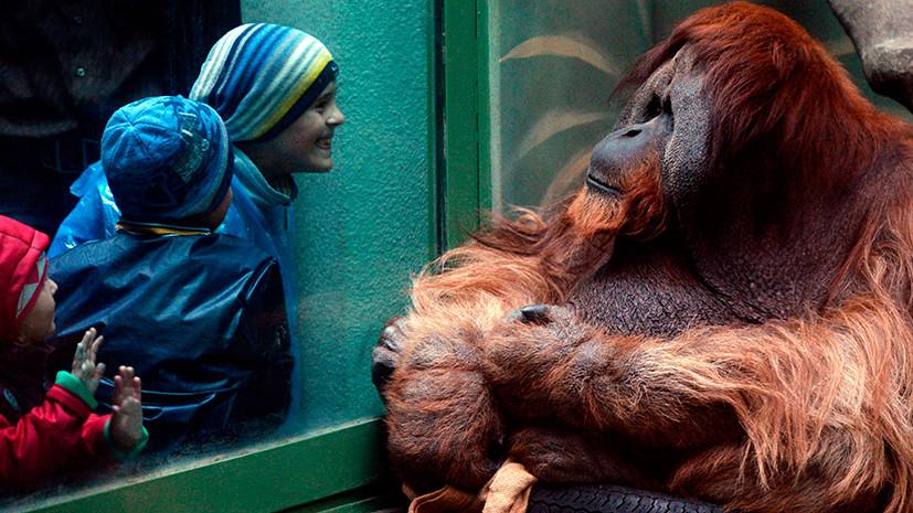 в Московском зоопарке разбирают животных под опеку