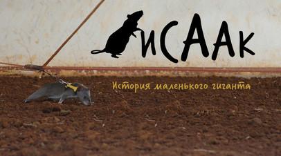 «Исаак. История маленького гиганта»: фильм RTД  о хомяковой крысе-сапёре