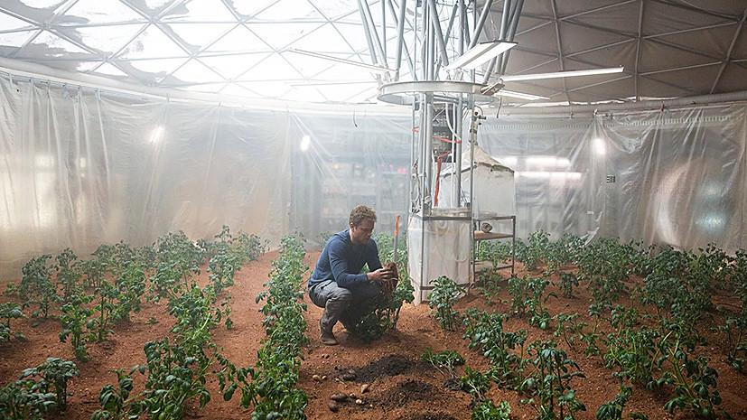 Космические клубни: учёные вырастили картофель в «марсианских» условиях
