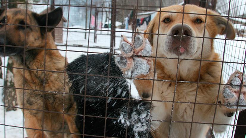 Человеческий подход: в ГД подготовили поправки в законопроект об обращении с животными