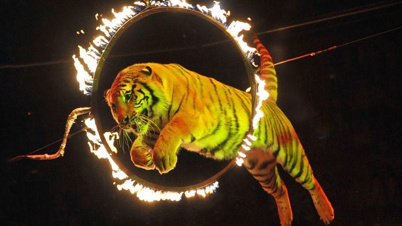 Без налогов и клеток: в России создают новую концепцию развития циркового дела