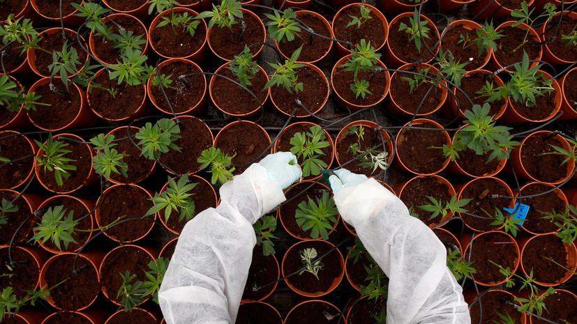 Трава у дома: как американцы пытаются отстоять право на курение марихуаны