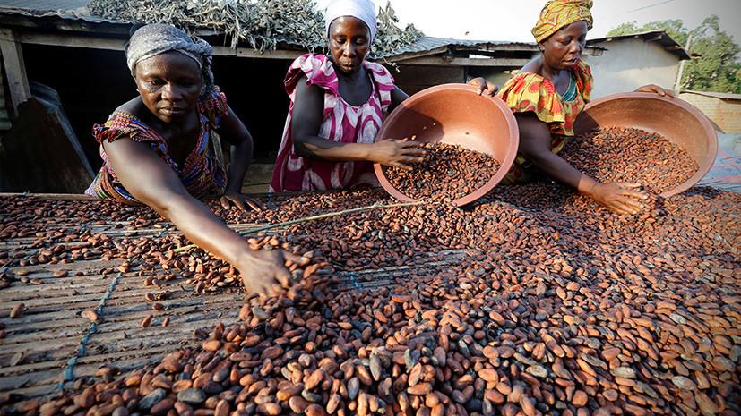 Горький вкус какао: цены на сырьё для шоколада упали до минимума 2008 года