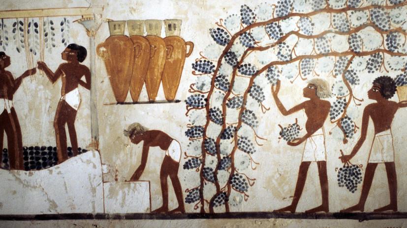 Археология виноделия: что пили апостолы, фараоны и древние китайцы