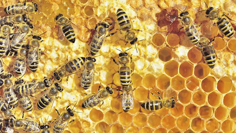 Как личинки восковой моли расщепляют полиэтилен