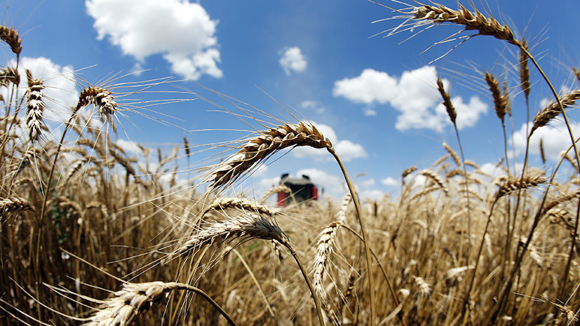 Хлебный путь: в Турции сняли ограничения на поставки российской пшеницы