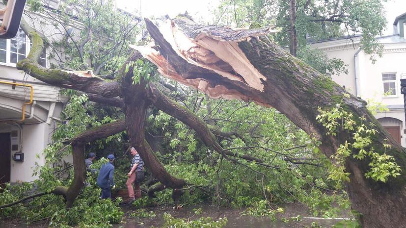 Удар стихии: в Москве жертвами урагана стали 11 человек