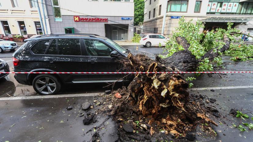 Стихийное совпадение: почему шквалистый ветер в Московском регионе обернулся трагедией