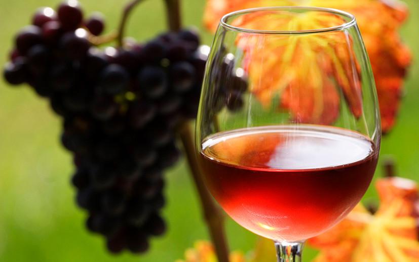 Истина в вине: как учёные проверяют теорию о пользе умеренного потребления алкоголя