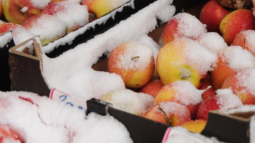 Эксперты прогнозируют снижение урожая из-за холодной весны