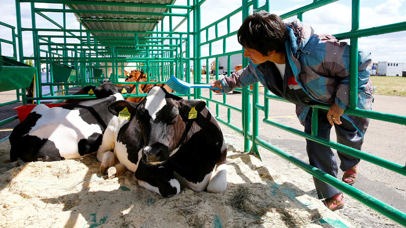 С Поднебесной на землю: как китайцы планируют перестраивать сельское хозяйство Белоруссии