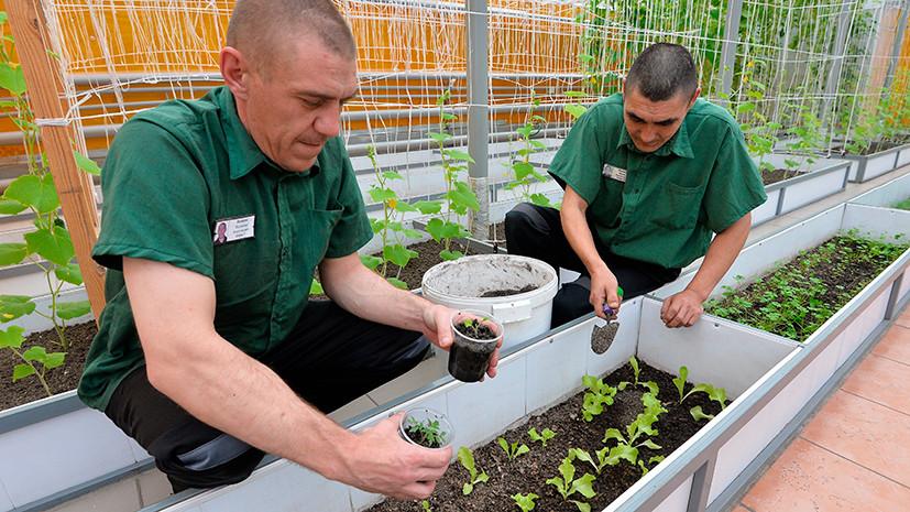 Трудотерапия в действии: ФСИН предлагают эффективнее использовать работу заключённых