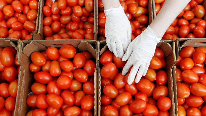 «Мы не хотим слышать слово «ограничения»: Турция пригрозила ответными мерами из-за запрета на ввоз томатов в Россию