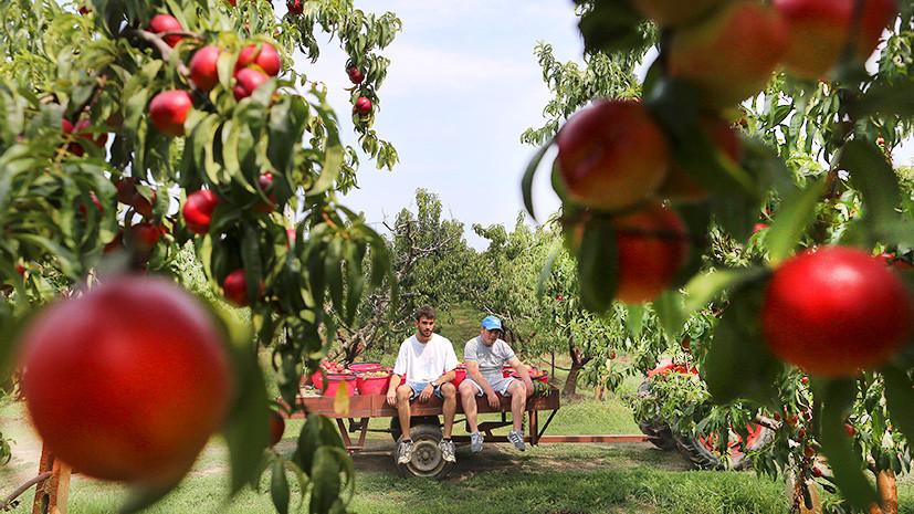 Санкции за чужой счёт: США подсчитали убытки ЕС от запрета ввоза фруктов в Россию