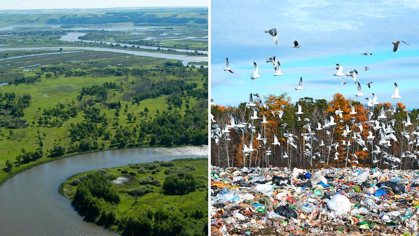 «Зелёное» лето: составлен экологический рейтинг регионов России с июня по август 2017 года