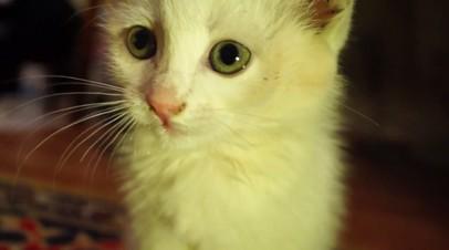 Из-под земли достали: новосибирские диггеры вытащили котёнка из канализации
