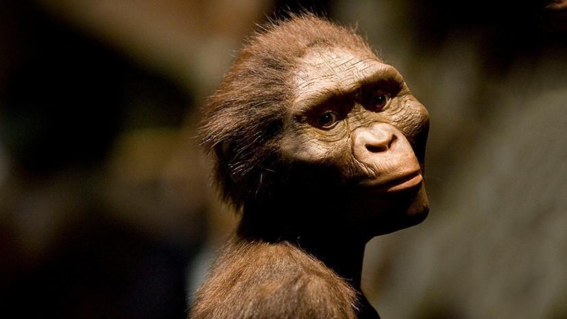 Открытие — по зубам: предки человека могут оказаться на 10 млн лет древнее, чем считалось ранее