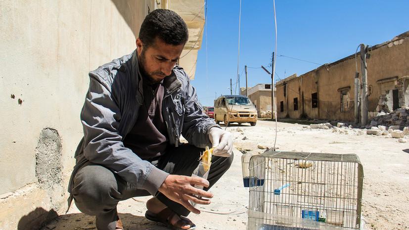 МИД России ответил на заявления главы расследования химатак в Сирии »