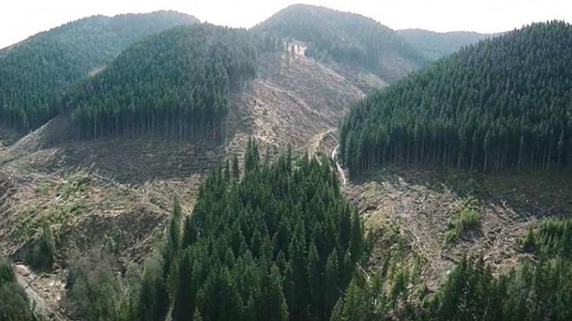 Топорный подход: чем грозят Украине массовые вырубки леса