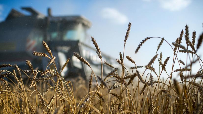 В Минсельхозе США заявили о повышении производства пшеницы и кукурузы в Крыму и о снижении на Украине